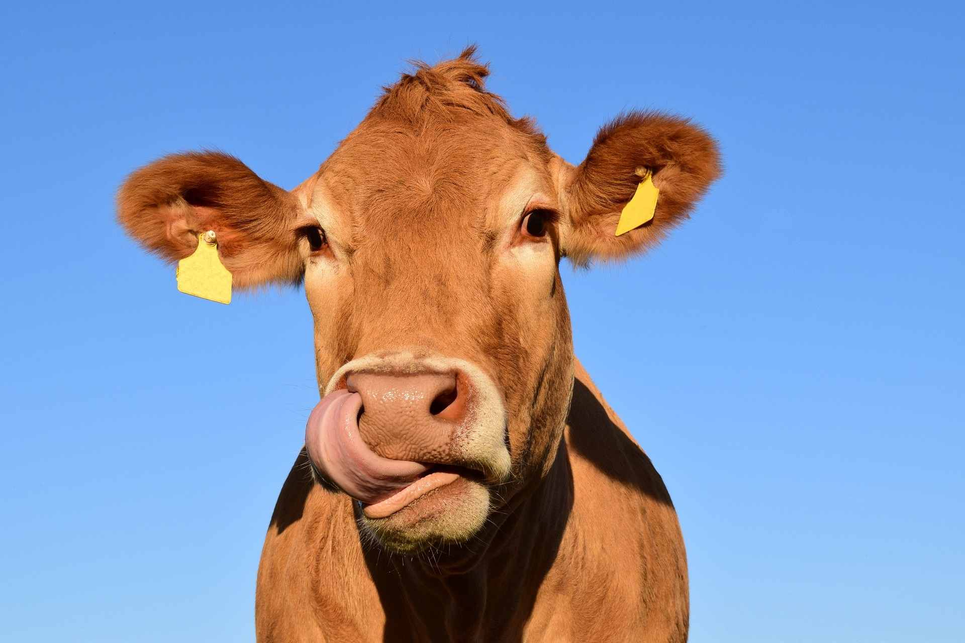 wat is lactosevrij