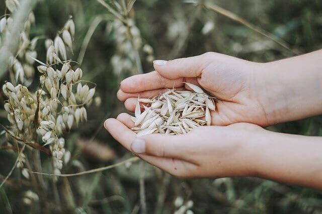 Wat is haver voor ingrediënt dat je gebruikt voor het maken van havermelk